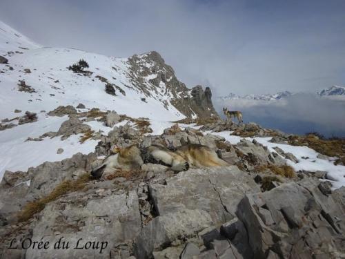 clt-l-oree-du-loup-gap-20