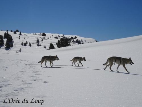 clt-l-oree-du-loup-gap-5