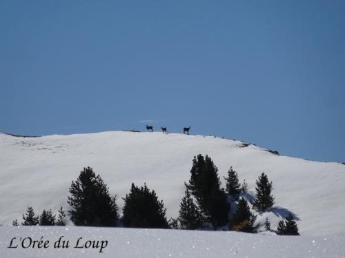 clt-l-oree-du-loup-gap-7